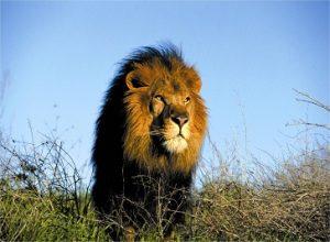 Afroventures Tours & Safaris