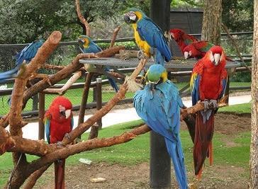 Bird Gardens Johannesburg
