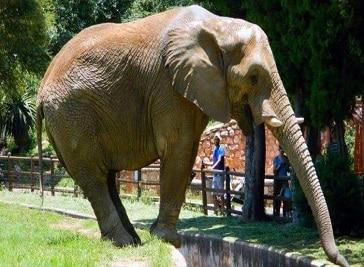Johannesburg Zoo Johannesburg